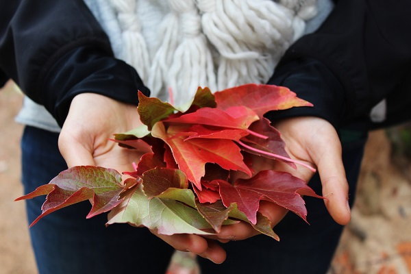 holding fall leaves